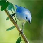 blue colored bird